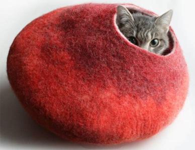 Evcil Kedi Ürünleri